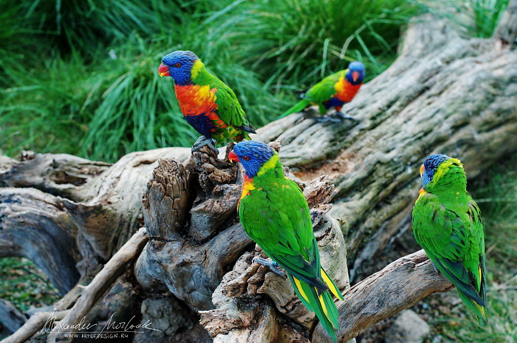 Bright tropical birds